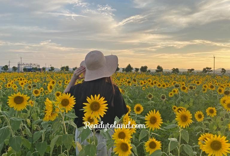 ono-sunflower-hill