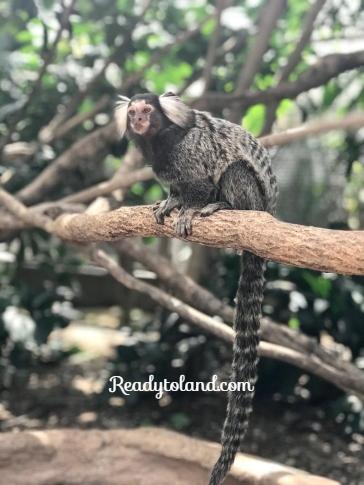 kobe-animal-kingdom